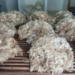 English Leicester wool